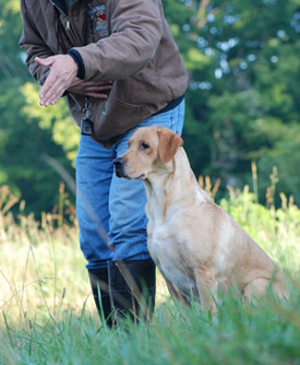 HuntingDogTrainingIndiana.jpg