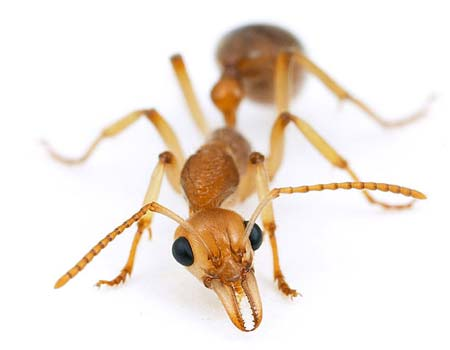 ants-insects-photo (1).jpg