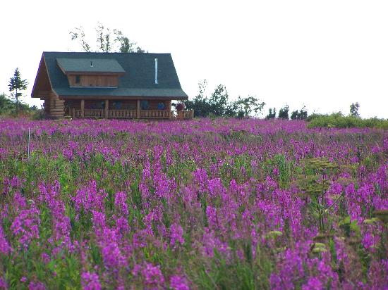 fireweed-field-in-alaska.jpg