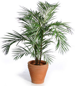 houseplant1.jpg