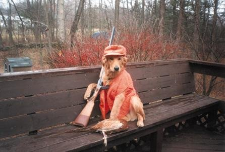 redneck_hunting_dog.jpg